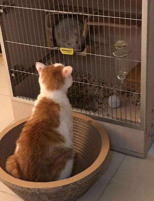 猫哭耗子假慈悲,不怀好意的动物打一生肖
