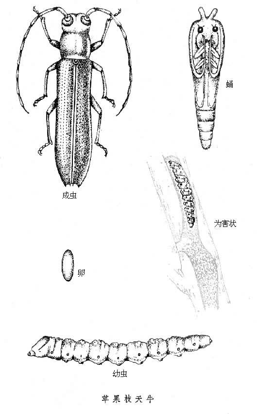 木本植物茎的结构示意图简笔画