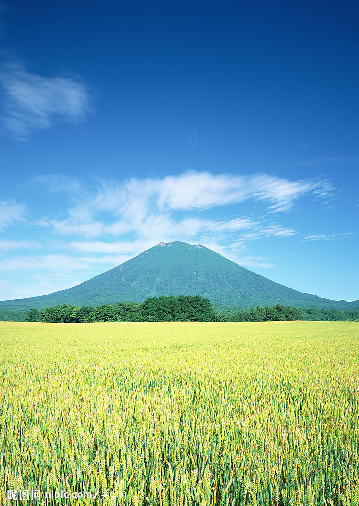 (图)小麦