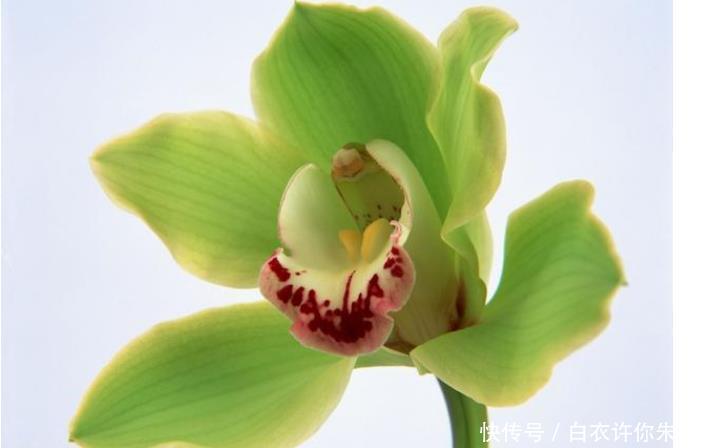 心理学你最喜欢哪朵花,测出自身带有什么好福气