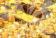 哥布林的秘密金库 icon.png