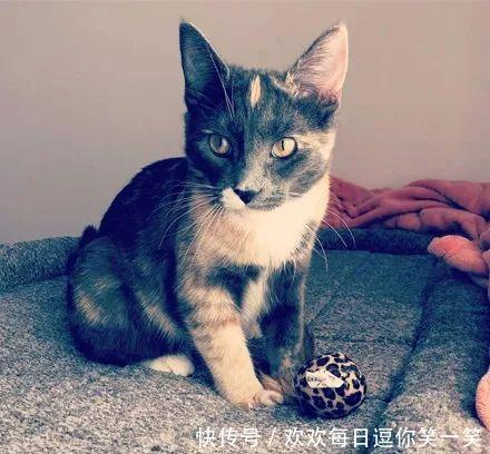 女子想把猫送走,德牧却紧紧抱住它抗议:这是我的姐姐!