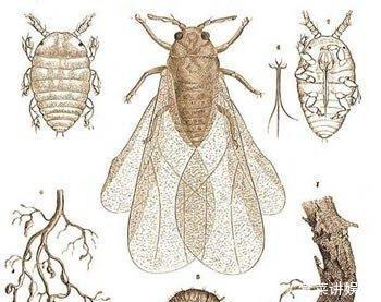一只小昆虫,改变了干邑在鸡尾酒的历史