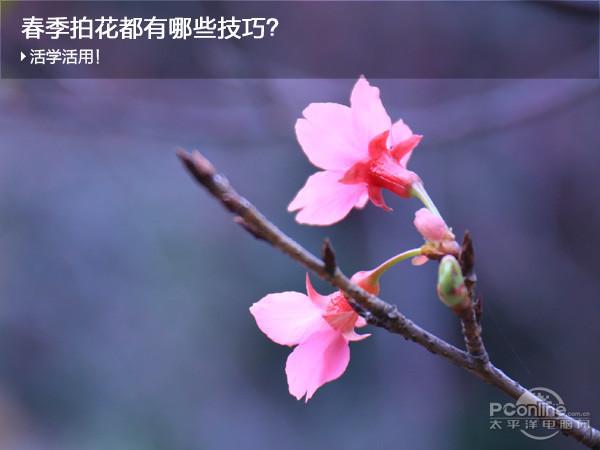 春天拍好花儿都有哪些技巧?试试这些招式吧 - 天地人 - 天地人和