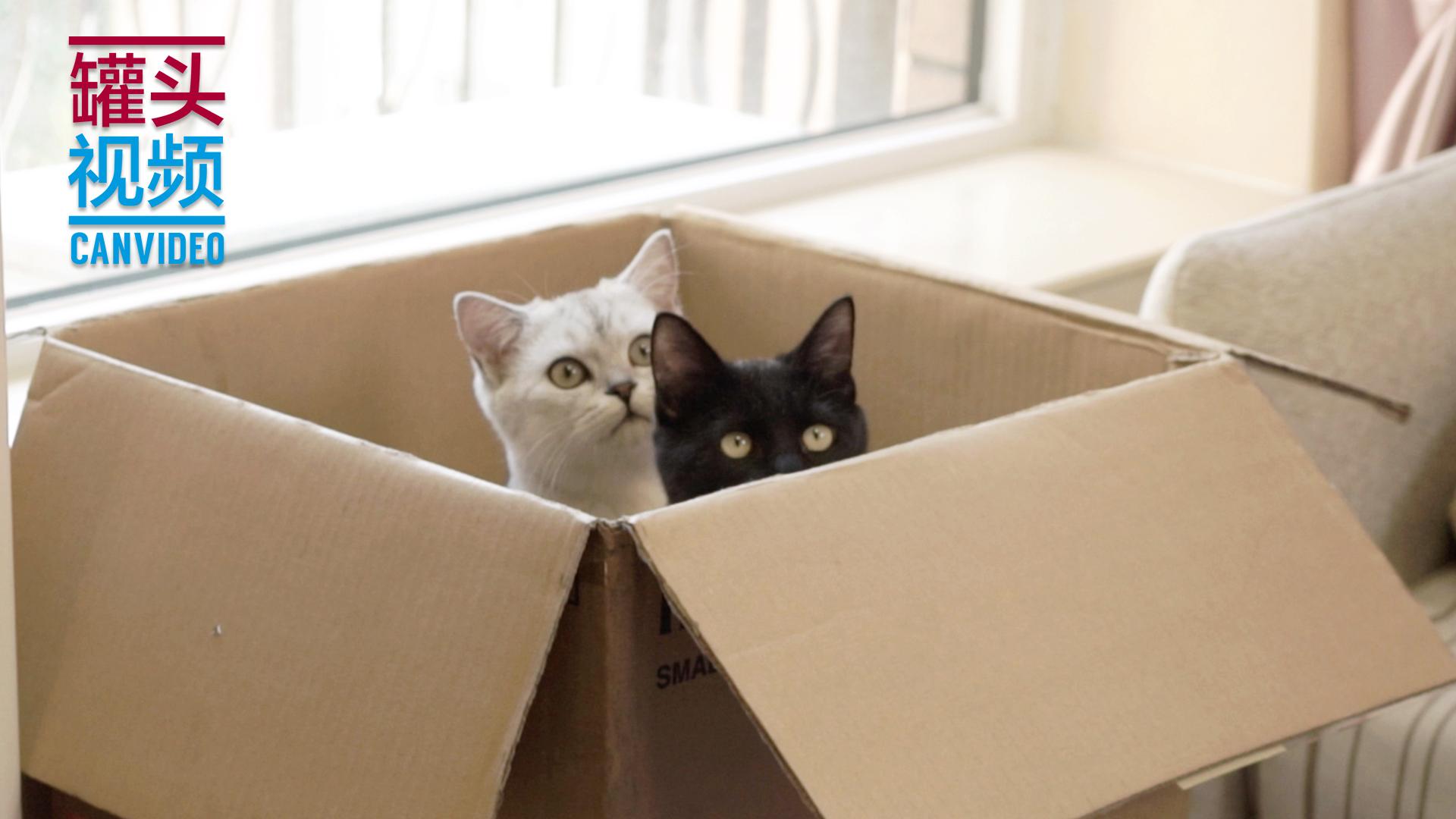 揭秘猫咪不解之谜,哪些地方是猫咪的最爱!