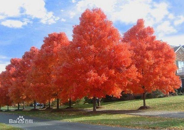 树的种类名称及图片