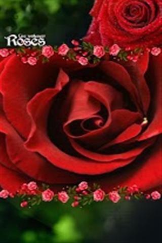 哥特式玫瑰动态壁纸
