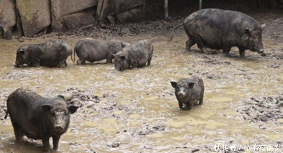 印度人不吃牛肉,不吃猪肉,不吃羊肉,那么他们吃