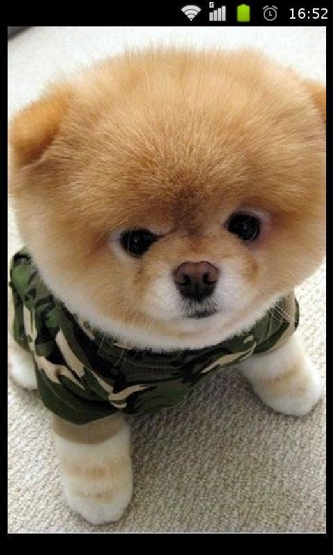可爱宠物壁纸精选_360手机助手