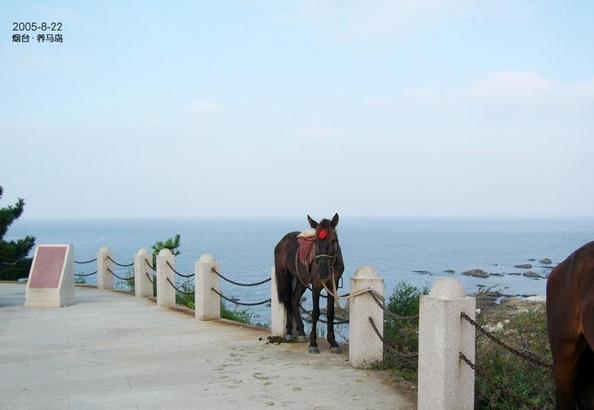 养马岛旅游度假区