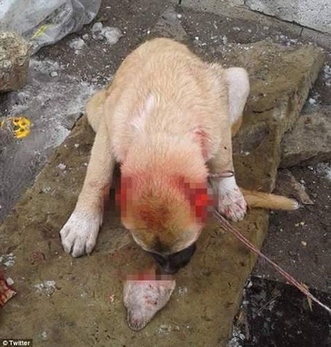 【转】北京时间       土耳其男子残忍割掉狗狗2只耳朵 - 妙康居士 - 妙康居士~晴樵雪读的博客