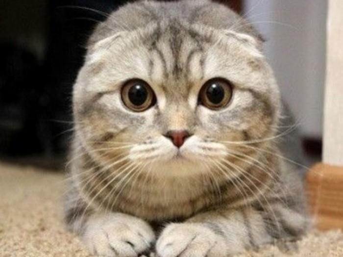 焦虑烦躁动物图片