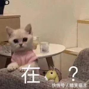 卖萌表情表情:你这个小可爱,电你喔的图片抓全集胸猫咪包大手图片