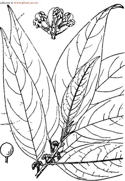 美丽的花丛的简笔画