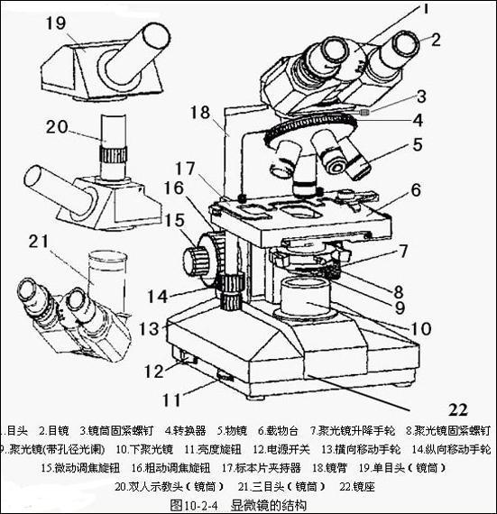 双目生物显微镜各部件的结构图