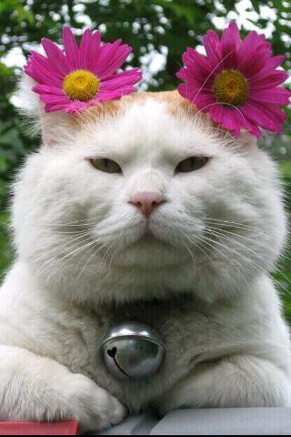 猫叔壁纸_360手机助手