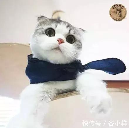小猫尾巴图片大全可爱