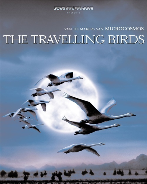内地名称《迁徙的鸟》香港名称《鸟与梦飞行》