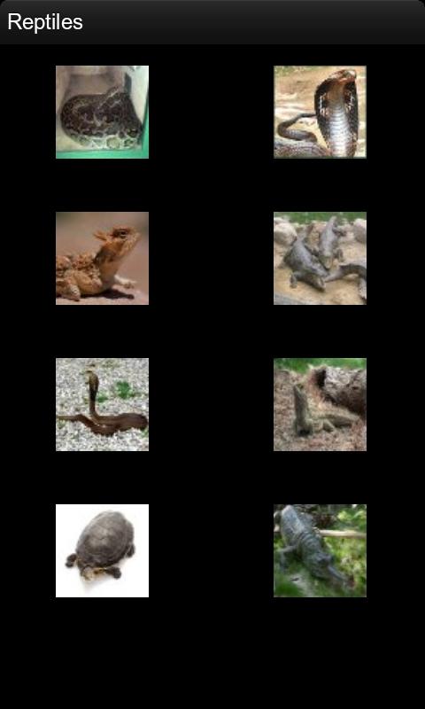爬行动物名片(来自:)