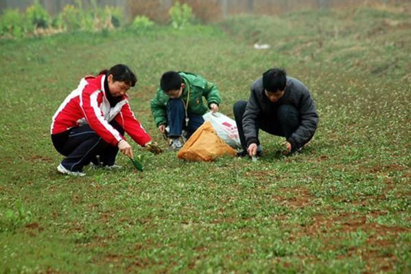 农村到处可见的一杂草,却可以降血糖、防并发症 - 周公乐 - xinhua8848 的博客