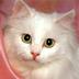 猫咪拼图 2: