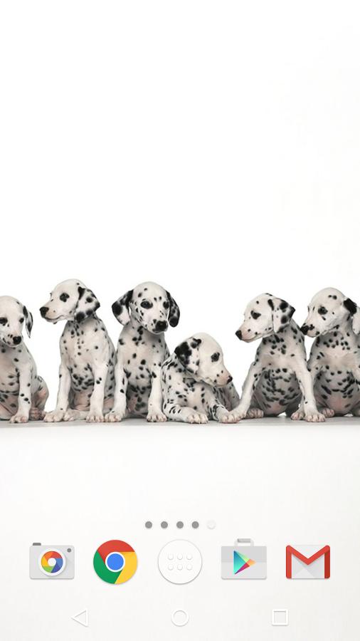 试想一下,你这个可爱的小动物才醒来展示 - 波美拉尼亚犬,波士顿梗犬