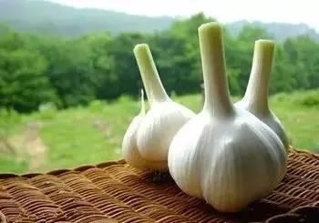 [转载]香菜、大蒜不是随便吃的,赶紧告诉家里做饭的人! - 烟圈 - 烟圈的博客
