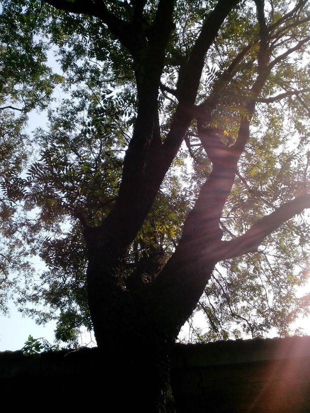 河南有檀木树吗?这树是什么品种?