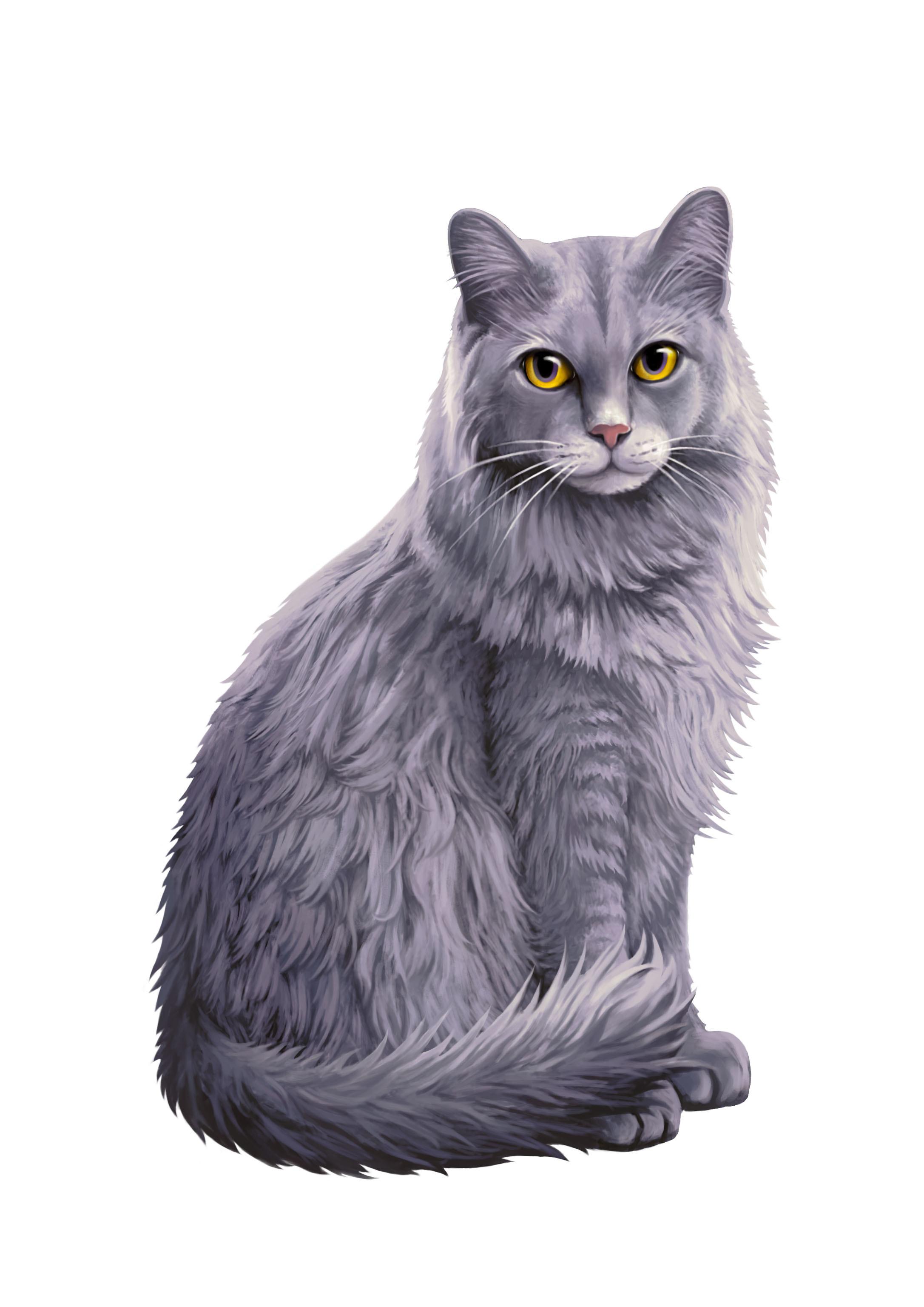 壁纸 动物 猫 猫咪 小猫 桌面 2173_3071 竖版 竖屏 手机