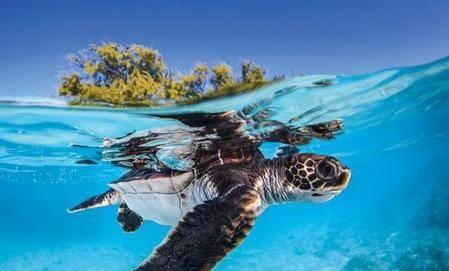 科学发现246只死亡海龟有58只是因为塑料片,一块塑料提高22%风险