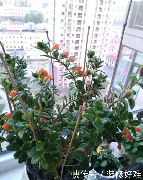 卧室不能养5种花,尤其是第五种,长期养室内,对身体不好