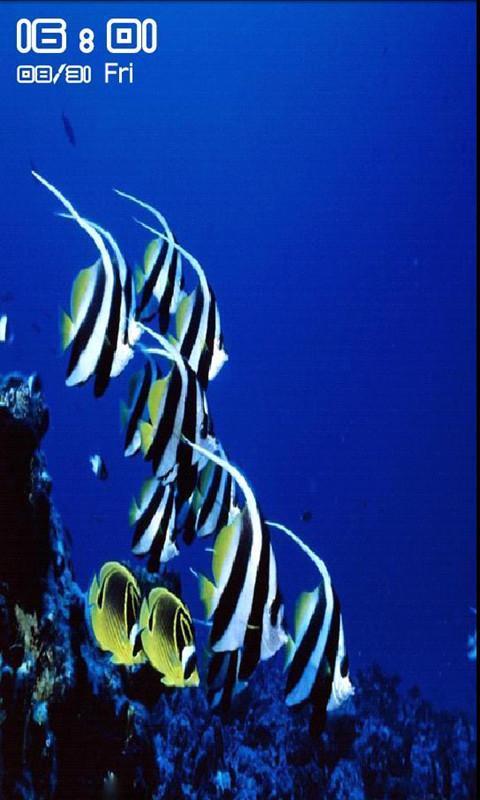 海底世界动态壁纸锁屏_360手机助手