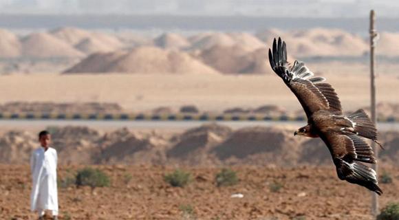 埃及欢庆世界猎鹰日