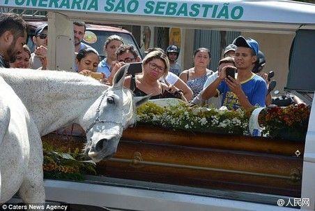 动物也深情!巴西白马出席主人葬礼哀鸣不止 - 阳光宝贝万花筒 - 阳 光 宝 贝 万 花 筒