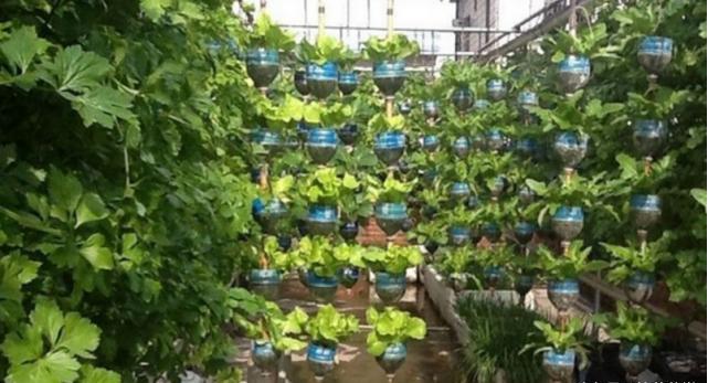 塑料瓶种�9f�x�~j�>�X_退休老人利用塑料瓶,在楼顶造了个菜园子,实现全自动的立体种植