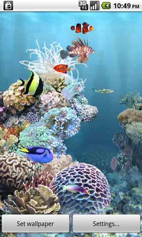 海底世界动态壁纸(来自:)