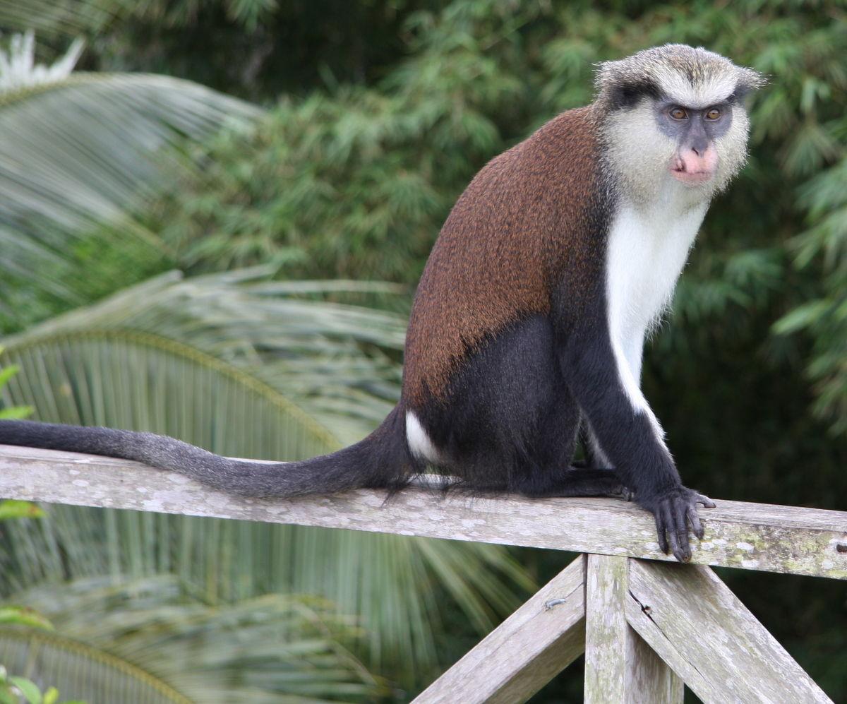 项链动物属什么猴