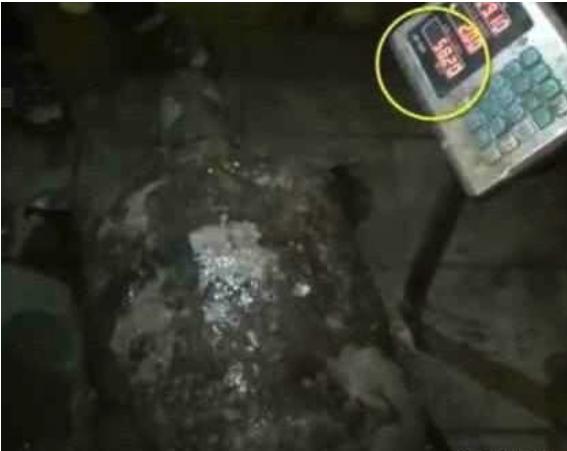 重庆嘉陵江水中巨怪尸体浮出江面 市民被眼前的庞然大物震惊了