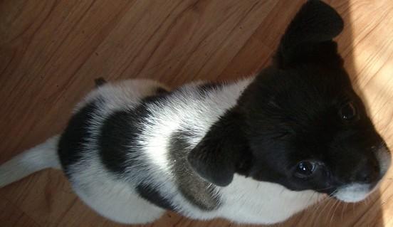 歌词是:我有只可爱的小狗,它是我的伙伴,它象只可爱的熊猫,身上黑白