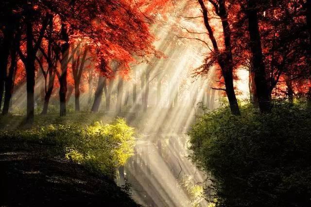 树林里的绝色风景,阳光洒在红叶林里,照在林间的溪水上,反射出一道道