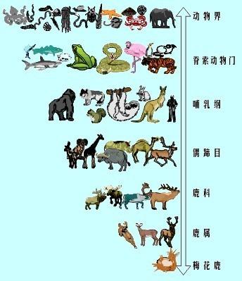 动物生长过程简笔画