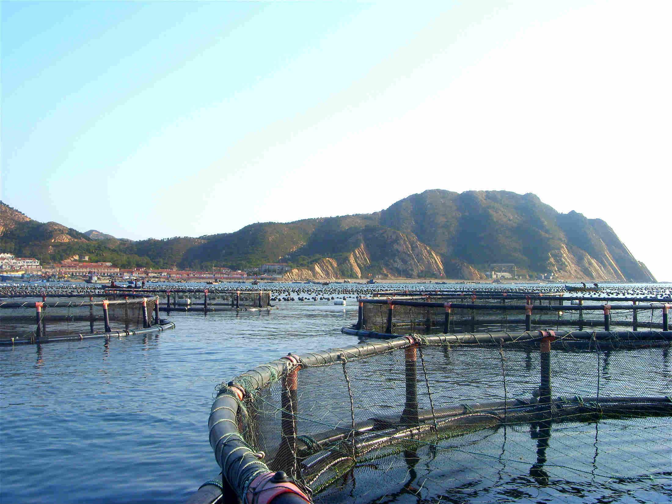 深岛渔村渔家乐:深岛渔村渔家