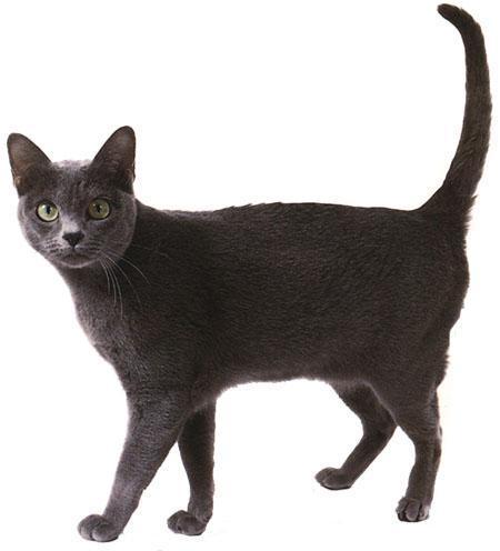 壁纸 动物 狗 狗狗 猫 猫咪 小猫 桌面 450_496