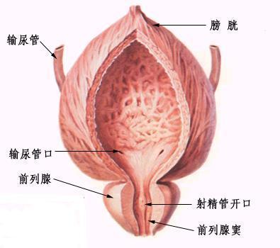使用男性素或男性女性素联合使用治疗前列腺肥大症