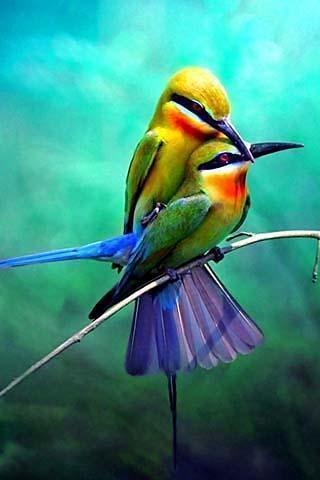 壁纸 动物 鸟 摄影 小鸟 桌面 320_480 竖版 竖屏 手机