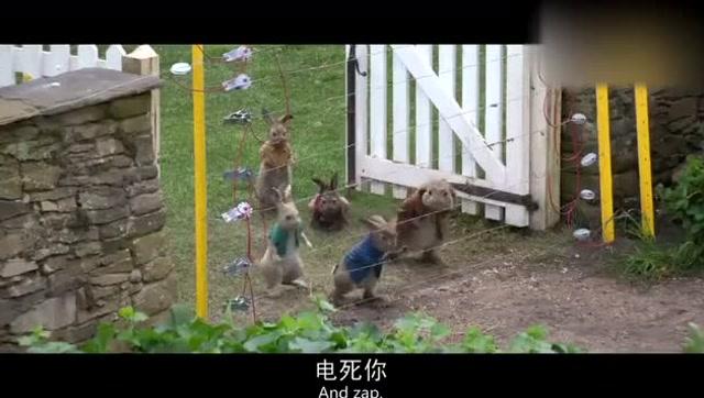 喜剧电影《比得兔》,为保卫家园兔子与人类斗智斗勇,笑得肚子疼