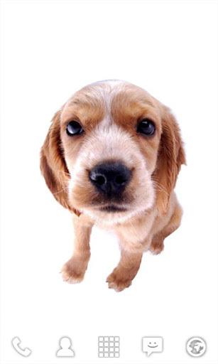 超可爱的狗狗动态壁纸
