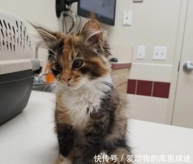 流浪小猫太饿向人类求助,填饱肚子之后,赖在主人家里不走了