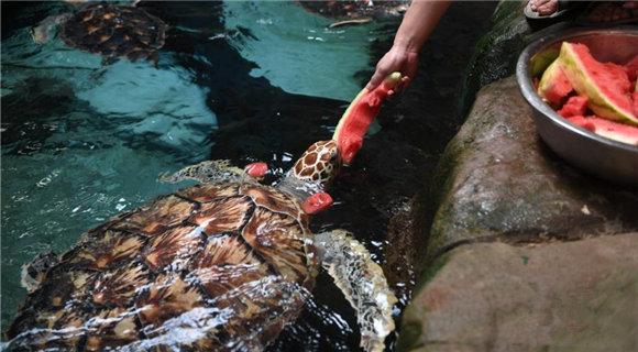 """海洋动物们的""""高温福利"""" 海龟吃西瓜海豚吃果冻"""