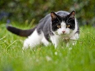 养猫的10个好处,用数据说服你,让你心甘情愿成为猫奴